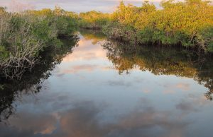 Mangroves at sunset in the Shark River before the 2010 cold event. Photo by Jennifer Rehage, Florida International University.