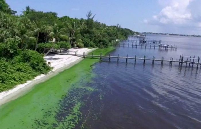 Blue-green algae in the St. Lucie River in Florida. Photo by: WPTV