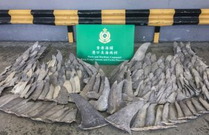 Fins from threatened shark species seized by border control in Hong Kong.