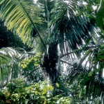 Palm species named after Wertheim Conservatory curator