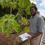 Senior Agroecology Student Nall Moonilall conducts research at FIU's Organic Garden on the Modesto A. Maidique campus.