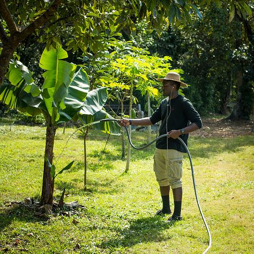 FIU agroecology organic garden