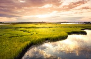 Professional mediation can help Everglades restoration