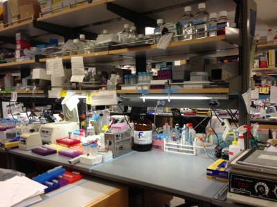 Aneysis Gonzalez's work station in Dr. Thomas Südhof's lab at Stanford.