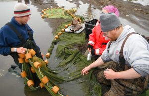 Kevin Boswell (left) works up a seine haul of nearshore arctic habitats off the Beaufort Sea in the Arctic Ocean.