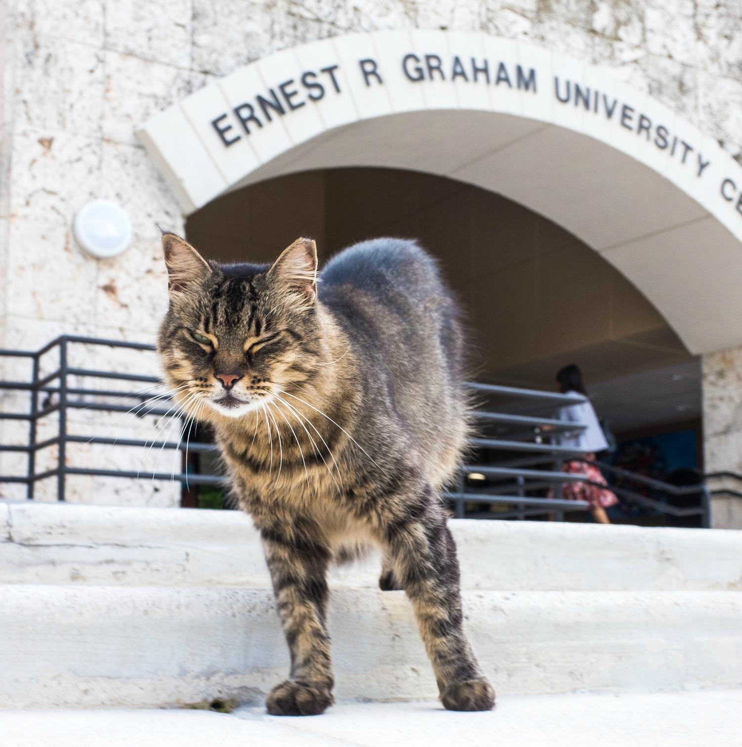 Cat GC