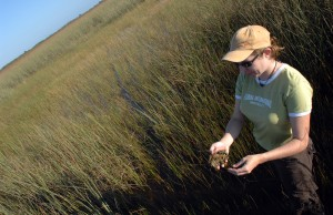 Evelyn Gaiser is a wetland ecologist examining long-term changes in lakes and wetlands, including the Everglades.