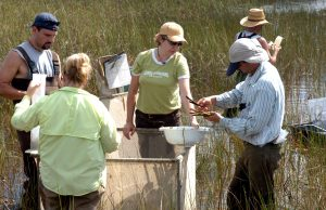 Evelyn Gaiser (center) conducts research on how water, climate and people impact the Everglades as part of the Florida Coastal Everglades Long Term Ecological Research Program.