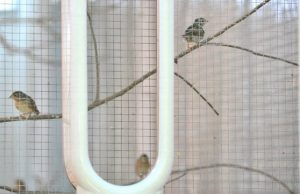 Endangered songbirds prefer a Dyson