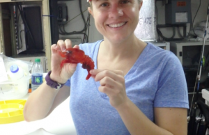 FIU marine scientist Heather Bracken-Grissom poses with a deep-sea shrimp aboard a research vessel in the Gulf of Mexico.