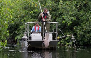 Biology doctoral candidate Ross Boucek goes electrofishing for snook in the Everglades.