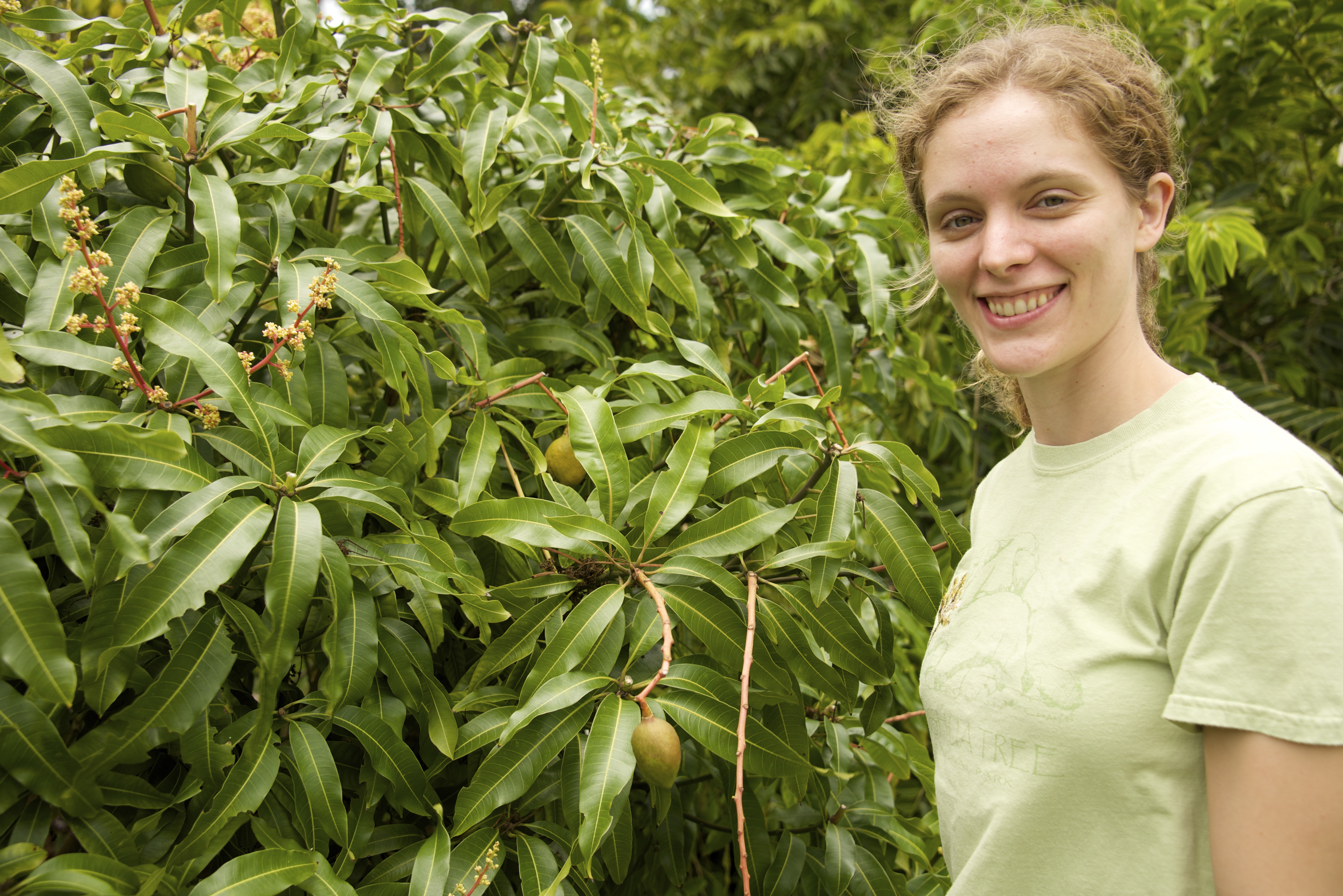 Biology Ph.D. student Emily Warschefsky is studying the genetic diversity and evolutionary history of mangos.