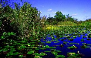 Everglades scholar brings together stakeholders for common-sense restoration