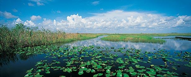 Everglades College 66