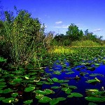 Grant for Everglades research renewed