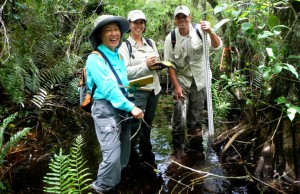 Hong Liu (left), Haydee Borerror (center) and Jason Downing (right) collect data in the Fakahatchee Strand Preserve State Park.