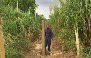 Garfield Jarrett installs fencing in his farm operation in the Redlands, Fla. where he hopes to grow a variety of tropical crops.