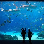 Georgia Aquarium is first stop on Worlds Ahead Tour