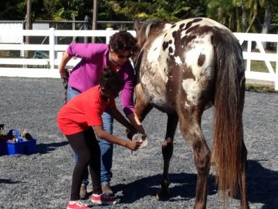 Horses_1