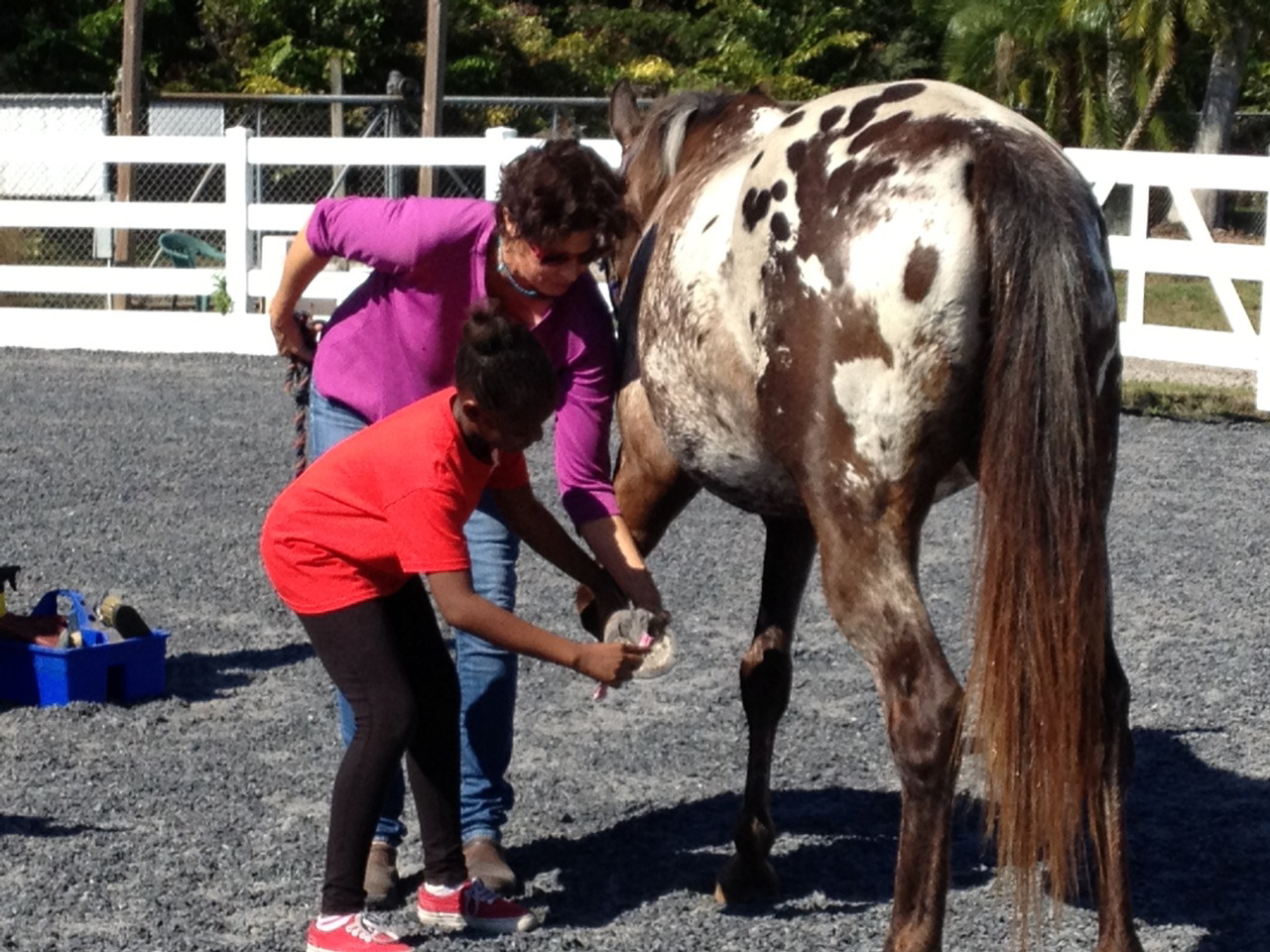 Psychologist turns to horses as therapy for kids in foster care