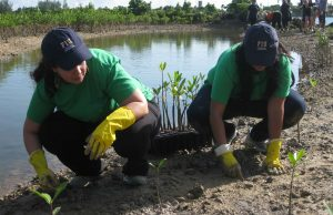 FIU plants half an acre of mangroves along Biscayne Bay