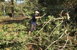 FIU botanist Oscar Valverde-Barrantes assists with recovery efforts at The Kampong in Coconut Grove, Fla.