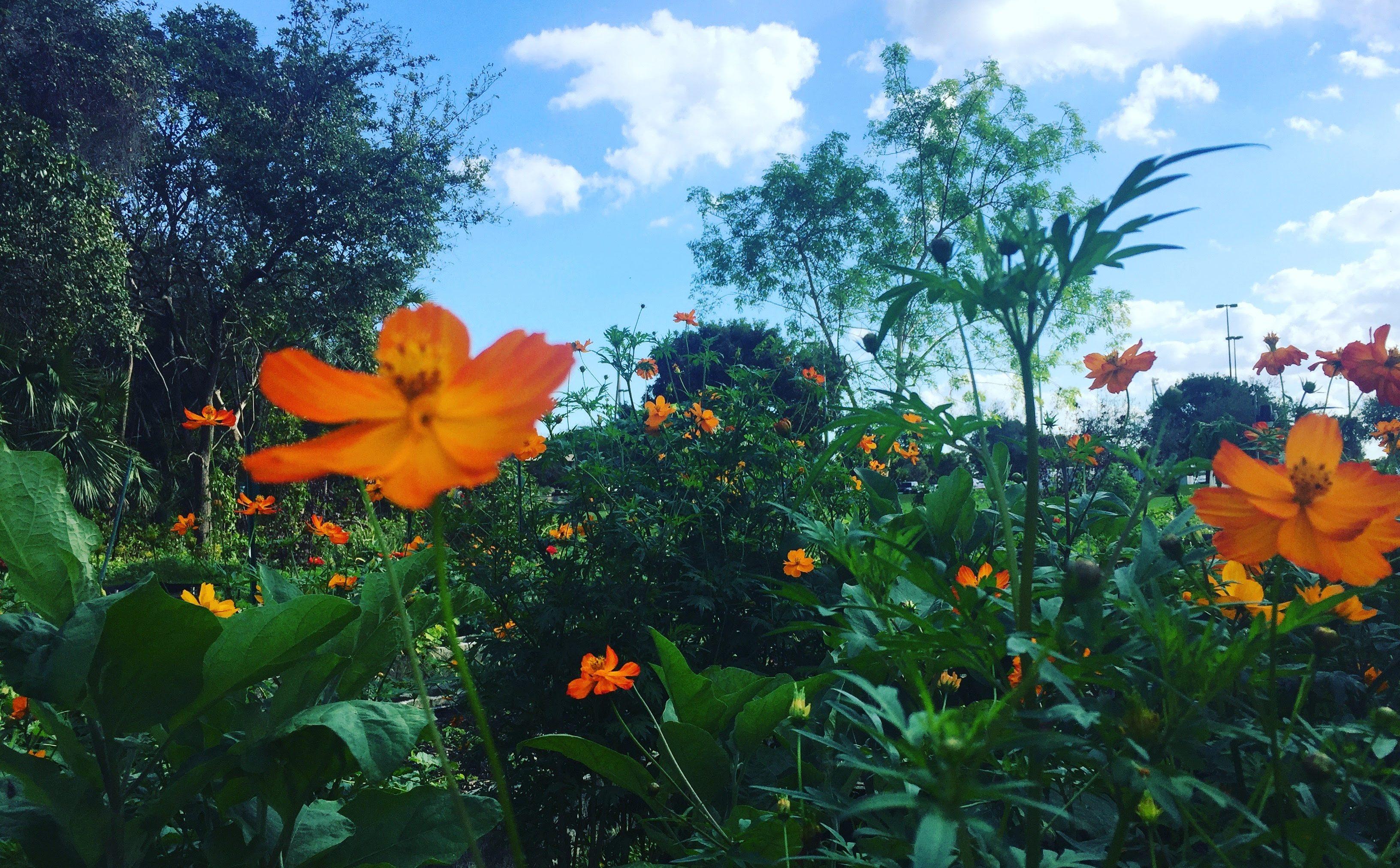 Club de estudiantes, fomenta la pasión por la jardinería - FIU Noticias 1