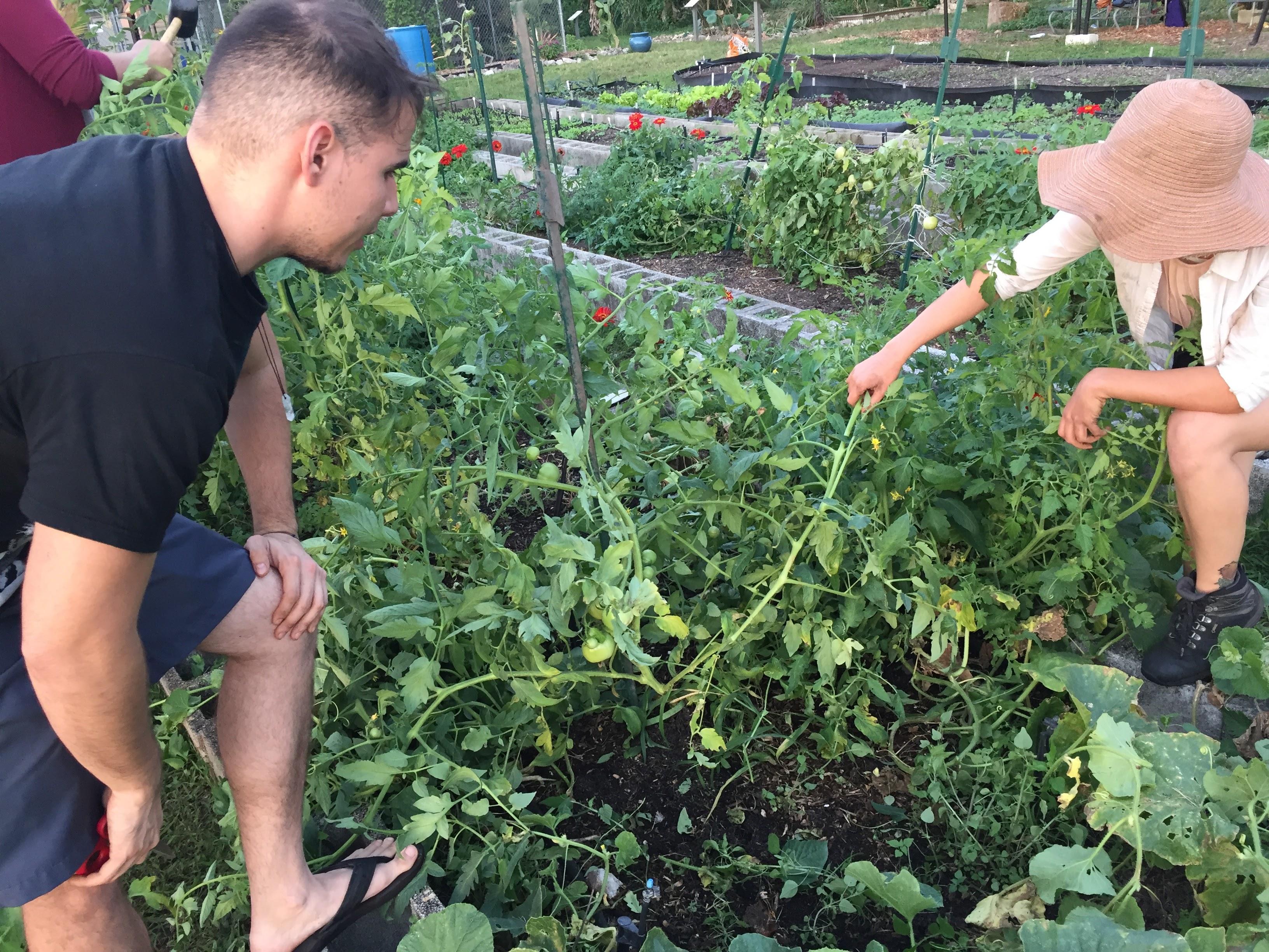 Club de estudiantes, fomenta la pasión por la jardinería - FIU Noticias 2