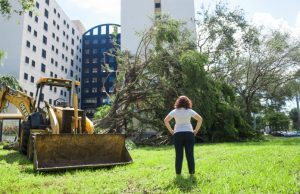 Tree preservation plan helped campus landscaping survive Hurricane Irma
