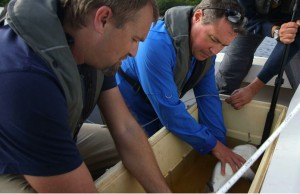 FIU marine scientist Mike Heithaus (left) and Jeff Corwin (right) examine a baby bull shark in the Everglades National Park.