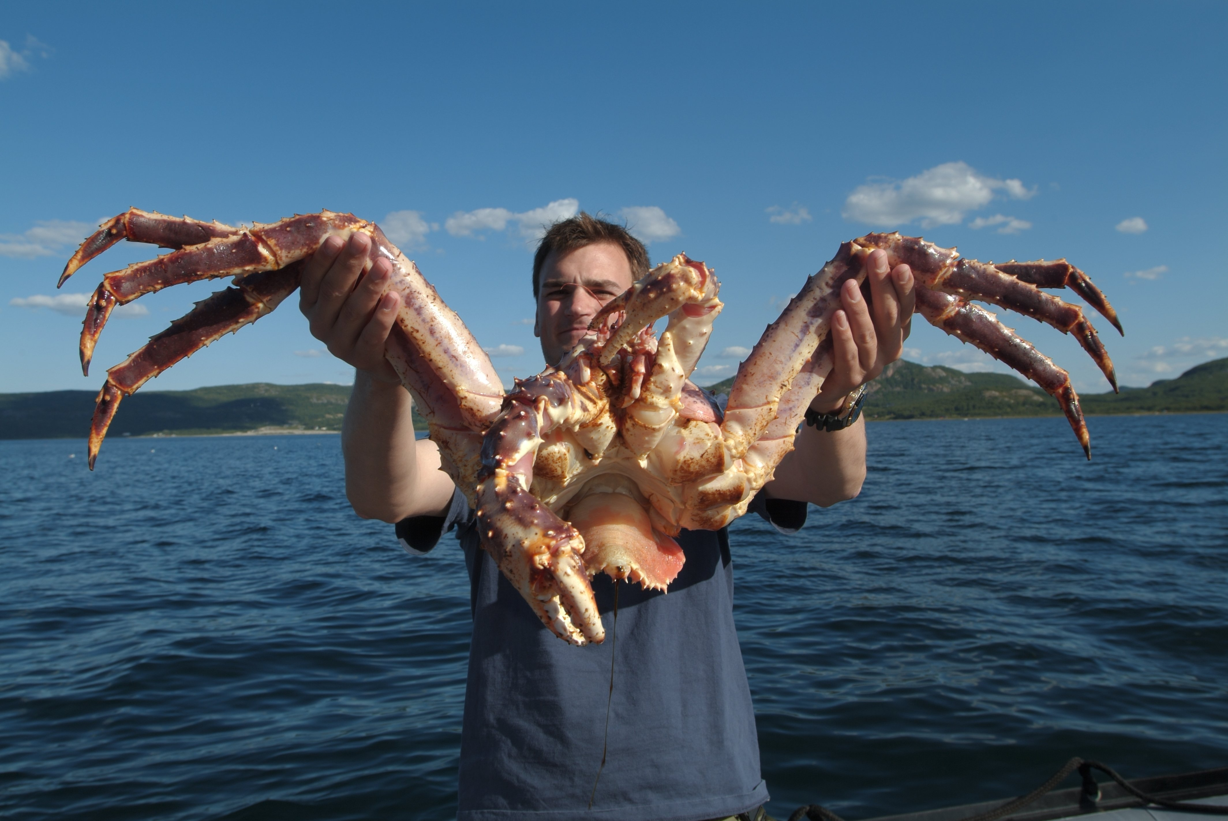 More than 120 species of king crabs are known.