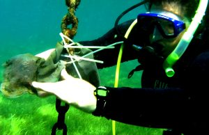 Marine life invokes a love-of-life for one Ph.D. candidate