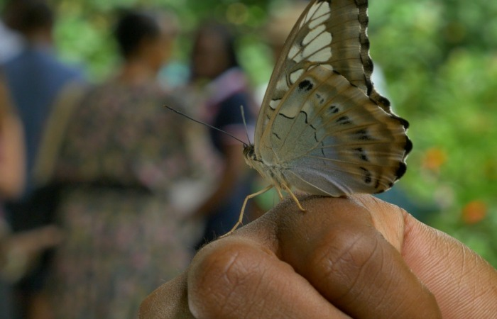 YALI Washington Fellows visit Fairchild Tropical Garden