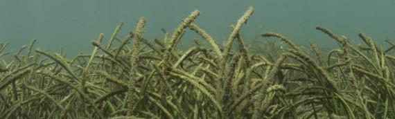 Shark Bay Australia Seagrass And Shark Bay Australia