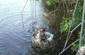 Ross Boucek retrieves underwater equipment used to detect spawning migrations of snook in the Shark River, Everglades National Park.
