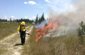 Alumna joins fire team at Everglades National Park