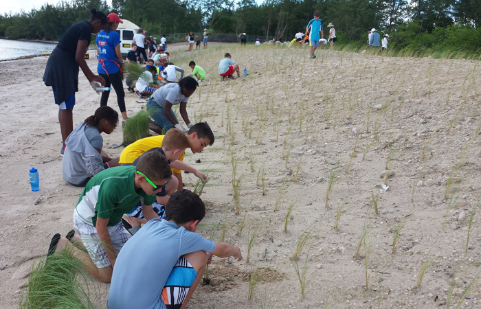 Campers in FIU's EcoAcademy plant sea oat plugs to restore dunes at Virginia Key North Point.