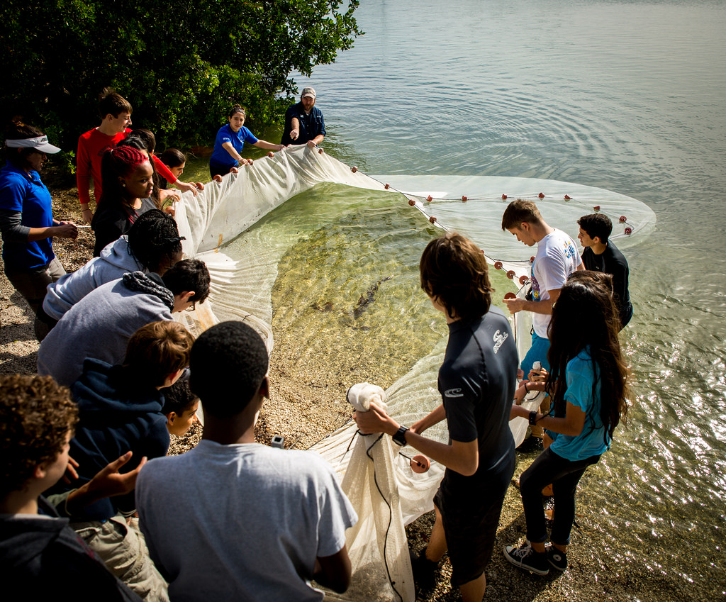 Students from MAST@FIU and volunteers from the FIU School of Environment, Arts and Society deploy a seine net into northern Biscayne Bay as part of a long-term ecological monitoring program of the bay's fish populations.