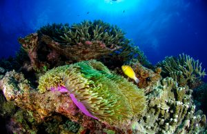 Deeper reefs won't offer much hope for shallow reef species. Photo Courtesy of California Academy of Sciences.