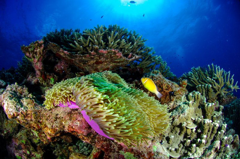 Deeper reefs won't offer much hope for shallow reef species.