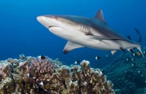 Fishing leads to significant shark population declines, researchers say
