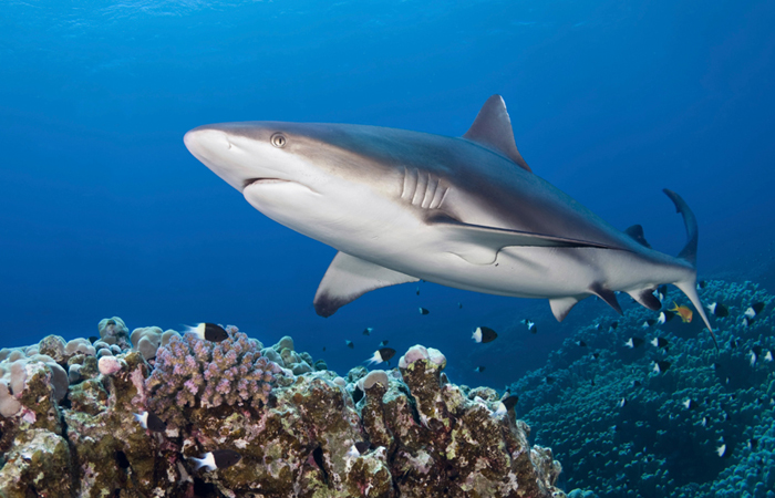 Humans are greater threat to sharks, not the other way around