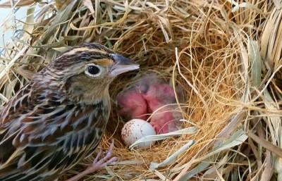 Sparrows 3