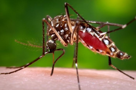 5 things you need to know about the Chikungunya virus