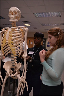 Alexus Cummings-Cook and Alyssa Cartwright in the anatomy lab.