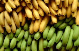 Researchers predict environmental factors will imperil banana production by 2060
