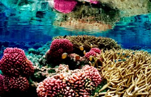Understanding genes could help save coral reefs