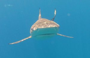 FIU shark experts list