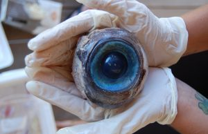 Giant eyeball puts biodiversity in focus