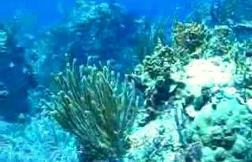 Common South Florida pollutants lead to coral disease
